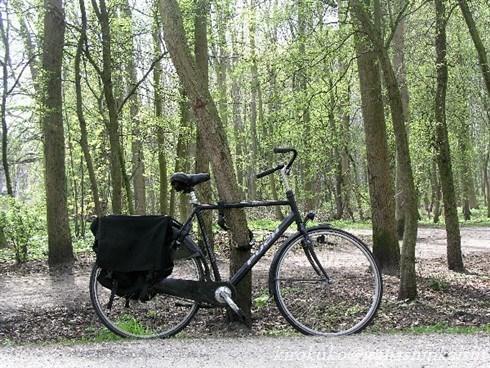 20自転車道P1010153_t_GF.jpg